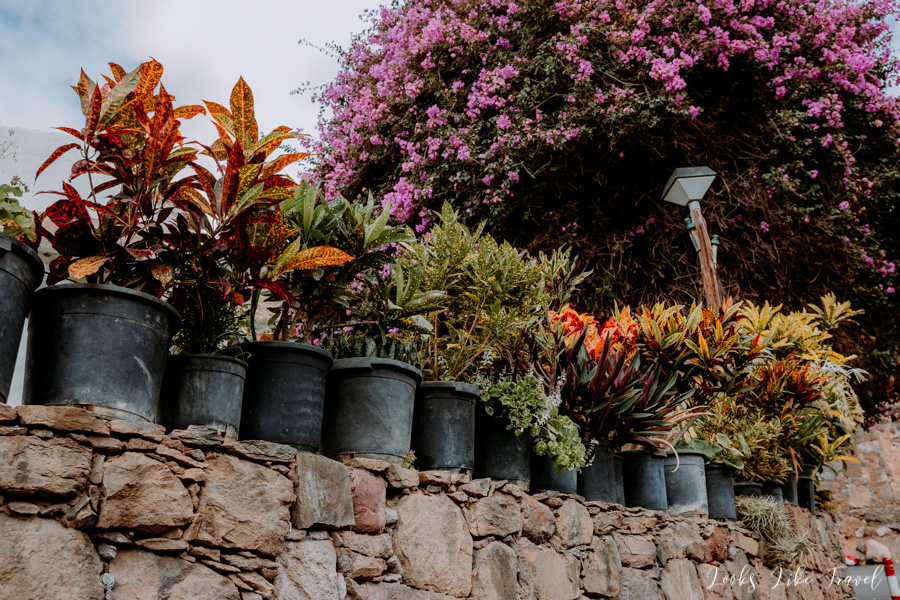 flower-filled places, Gran Canaria