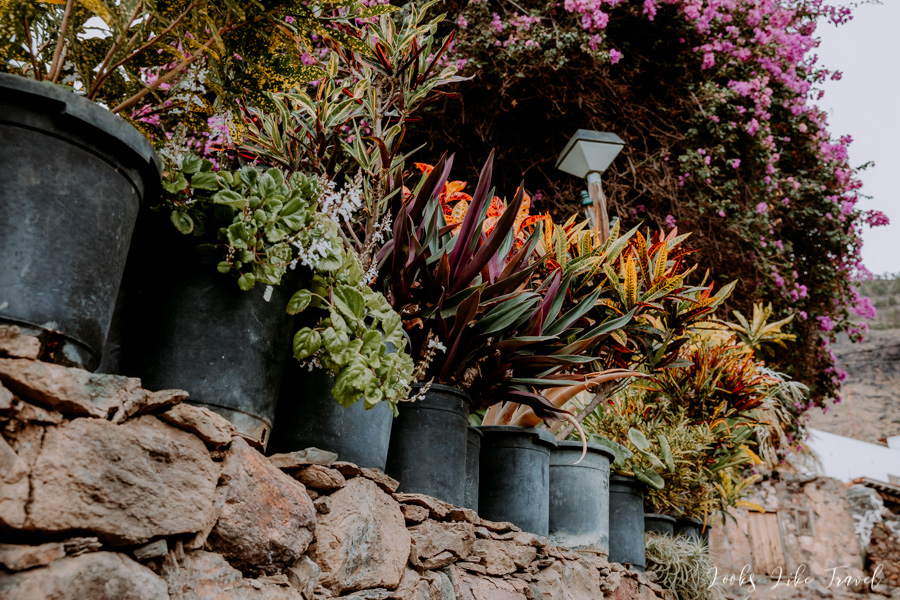flowers on the Canary Islands
