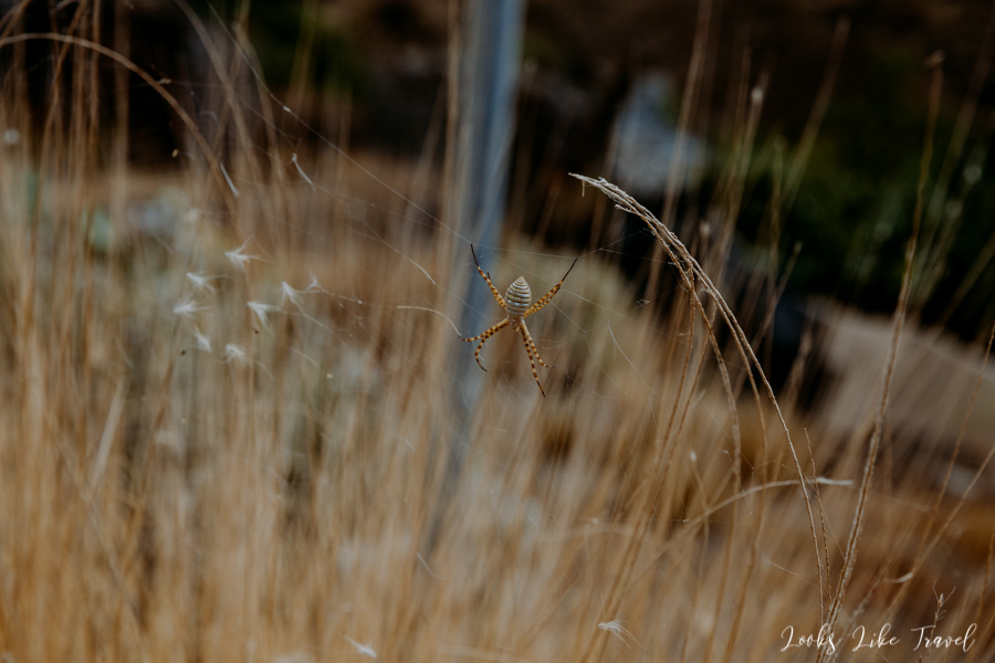 spider Gran Canaria
