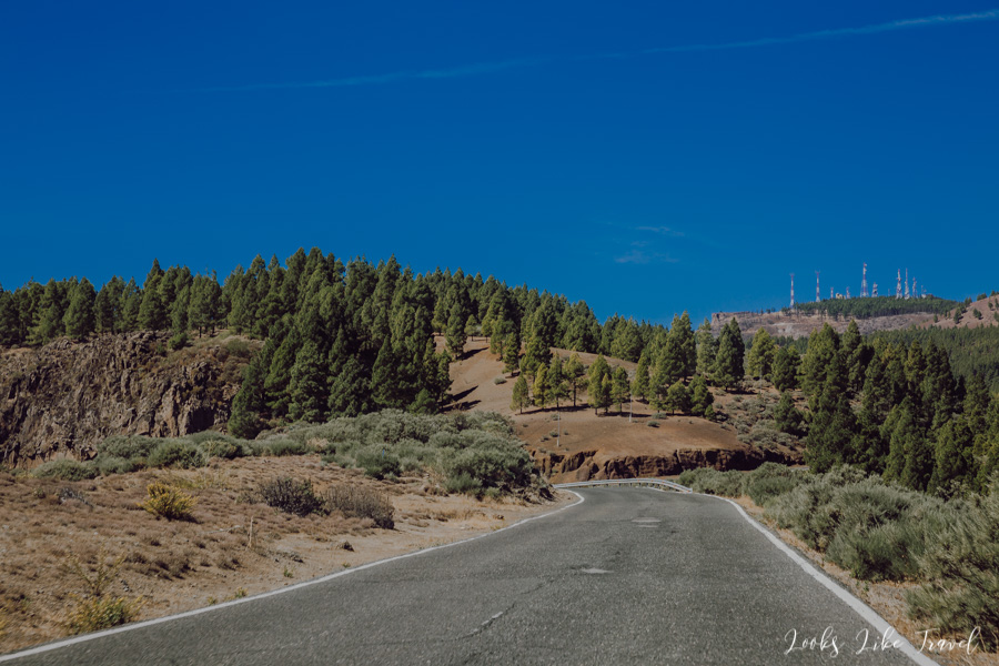 beautiful coniferous trees near Caldera de los Marteles