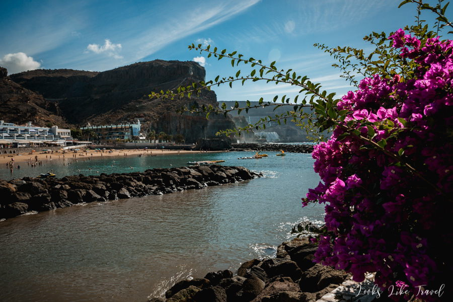 Gran Canaria, beautiful flowers and the ocean