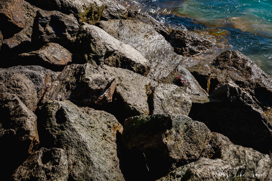 kraby na skałach, Hiszpania