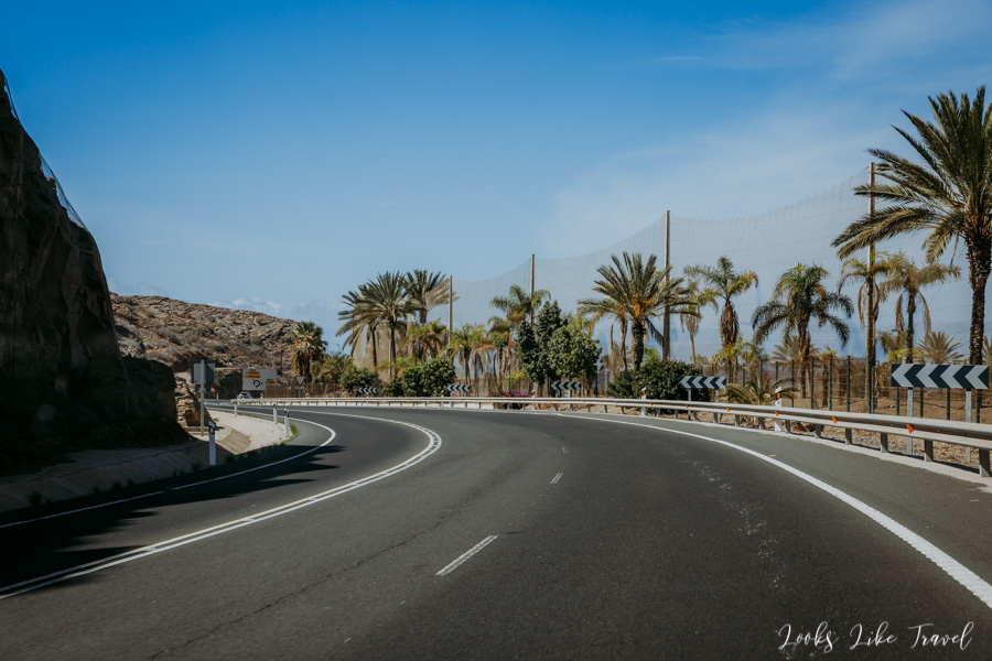 palm trees next to the Gran Canaria GC-1 motorway