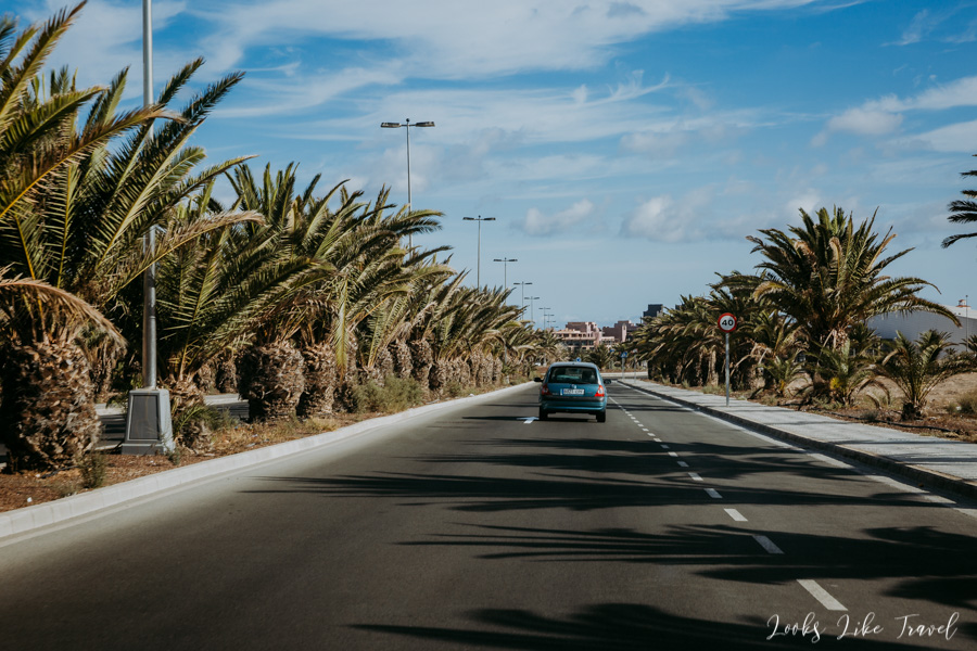 road among palms, Canary Islands