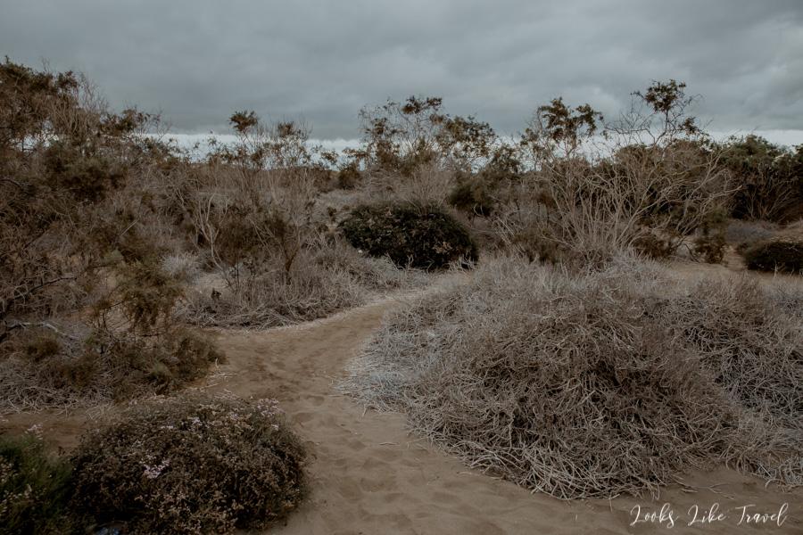 Dunas de Maspalomas, vegetation