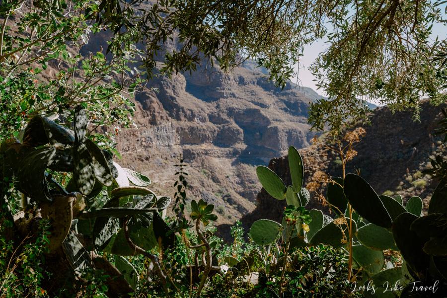 Gran Canaria, flora
