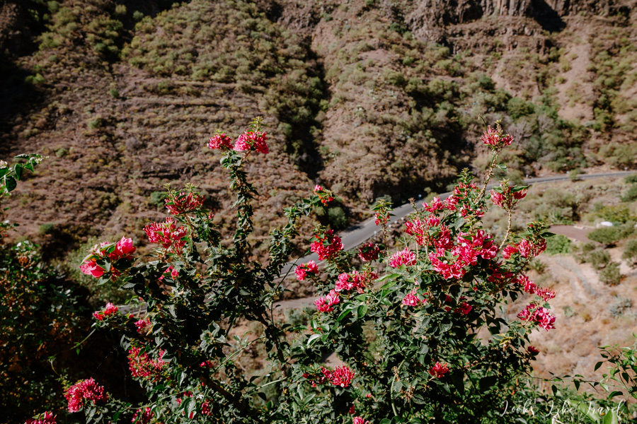 Gran Canaria and the local colorful flowers