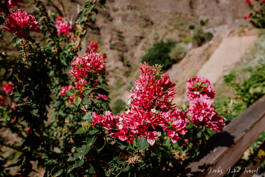 flourishing vegetation in Barranco de Guayadeque
