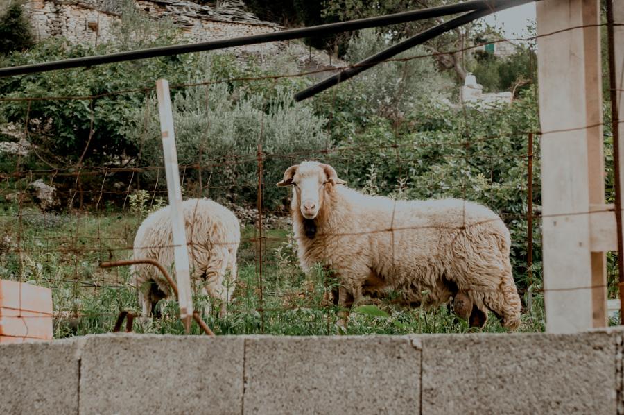 wieś Dol w Chorwacji