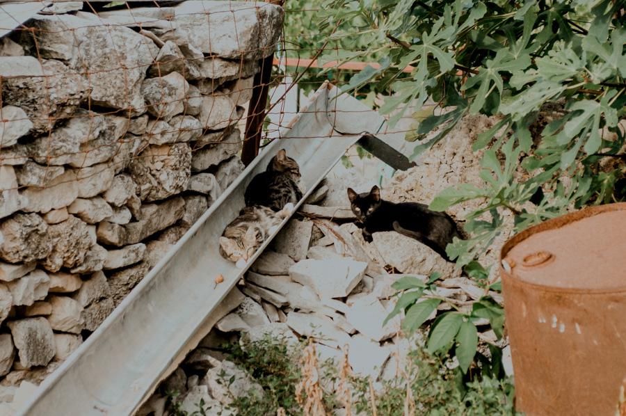 chorwackie koty, Dol