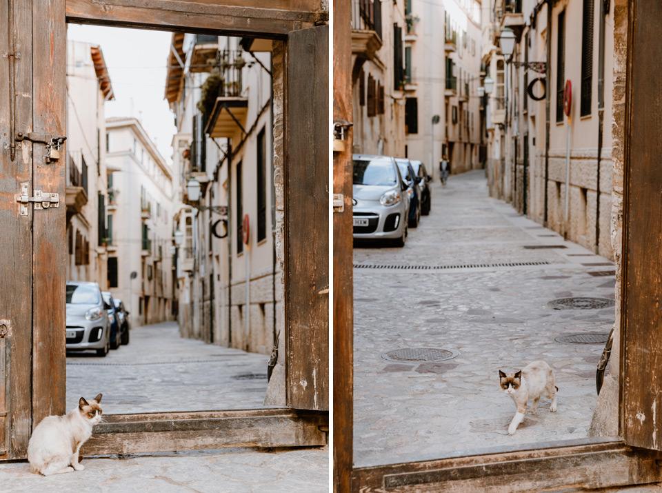 Palma de Mallorca cats