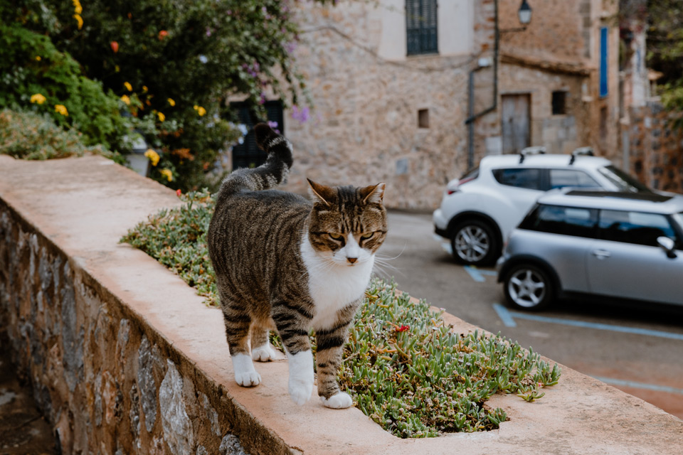 Mallorca, Deia- cat
