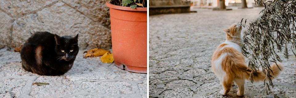 Mallorca, Valdemossa- cats