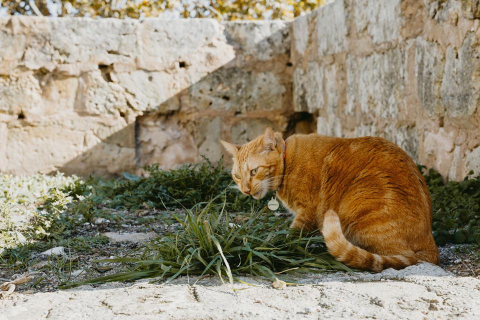 Mallorca, Alcudia, cat