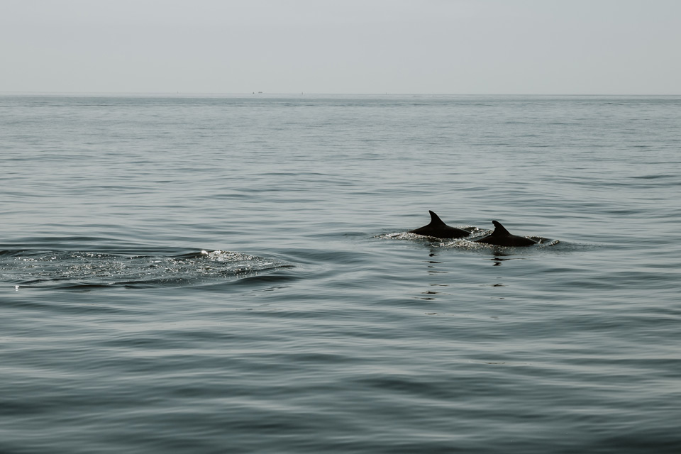 Lagos, cruise, dolphins