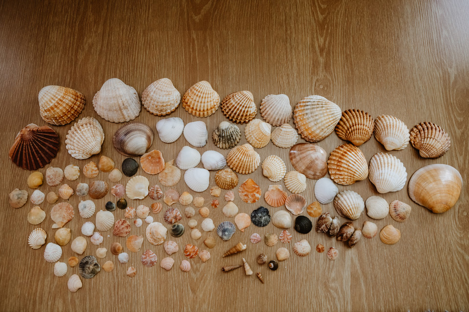 shells from Lagos