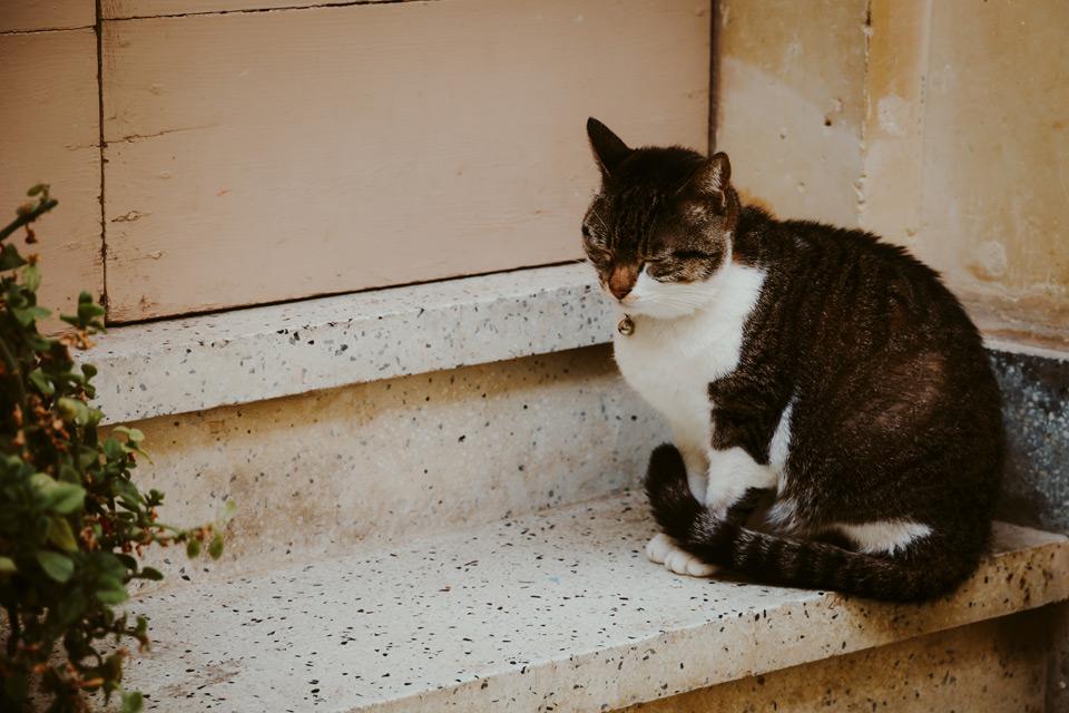 Gozo, Victoria, cats